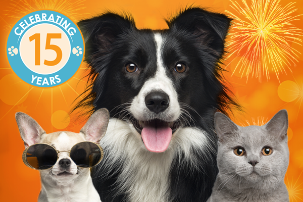 Celebrating 15 years of Blueprints veterinary marketing group
